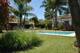 Зелёный сад. Испания, Малага : Роскошная вилла с тремя спальнями, потрясающим частным садом и бассейном.