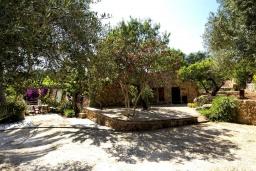 Зелёный сад. Испания, Менорка : Красивая и милая вилла с частным бассейном и джакузи и открытый сад, а также 3 спальни с кондиционерами