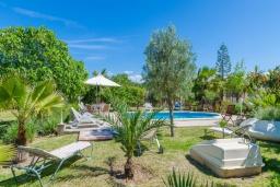 Зелёный сад. Испания, Кан-Пикафорт : Просторная вилла с бассейном и садом в Кан Пикафорт