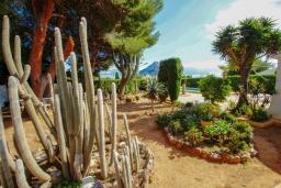 Зелёный сад. Испания, Кальпе : Вилла в традиционном испанском стиле в тихом месте всего в 5 минутах от песчаных пляжей Кальпе, 6 спален, 2 ванные комнаты, WIFI