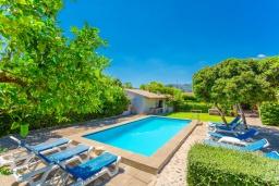 Бассейн. Испания, Польенса : Красивая вилла на испанском острове Майорка с частным бассейном, террасой и садом, 4 спальни, 3 ванные комнаты