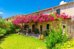 Зелёный сад. Испания, Польенса : Красивая вилла на испанском острове Майорка с частным бассейном, террасой и садом, 4 спальни, 3 ванные комнаты