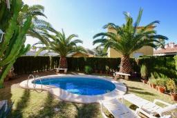 Бассейн. Испания, Олива : Частная вилла в окружении пышной средиземноморской растительности, гостиная, 2 спальни, 2 ванных комнаты, бассейн, Wi-Fi, парковка