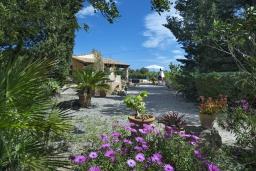 Зелёный сад. Испания, Польенса : Уютная вилла, расположенная между городом Полленса и пляжем Пуэрто-Полленса, с зеленым садом, бассейном, большой террасой и открытой обеденной зоной, 3 спальни, 2 ванные комнаты, мини-кухня, Wi-Fi.