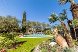 Зелёный сад. Испания, Алькудия : Загородная вилла для отдыха с красивым зеленым садом на всей территории, с 3 спальнями, 2 ванными комнатами и собственным бассейном.
