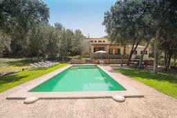 Бассейн. Испания, Кала Миллор : Красивая вилла окружённая садом из оливковых деревьев, современный комфортабельный интерьер, все удобства.