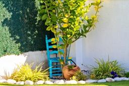 Зелёный сад. Испания, Альфас-дель-Пи : Современная вилла в стиле бунгало с собственным бассейном, находится в городе Альфас-дель-Пи, имеет 3 спальни и 1 ванную комнату