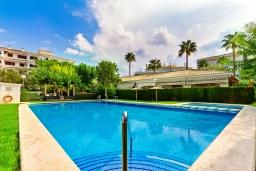 Бассейн. Испания, Альбир : Красивая квартира с ярким интерьером, идеально расположена в центре Альбира и всего в 100 метрах от пляжа, с 2 спальнями, ванной комнатой, французским балконом и общим бассейном