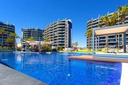 Бассейн. Испания, Пунта Прима : Замечательные современные апартаменты на набережной, с 2 спальнями, 2 ванными комнатами, подземной парковкой и общим бассейном на территории комплекса